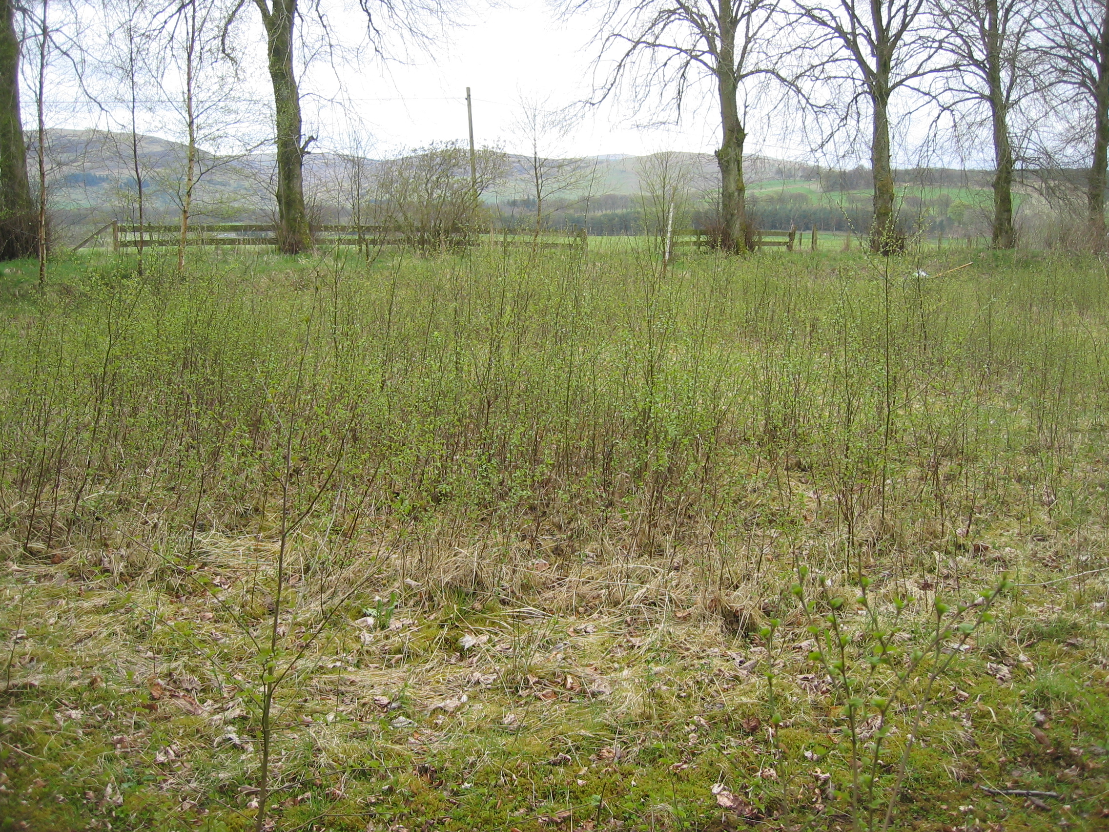 Our plot on 9 May 2010