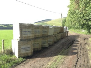 Bricks unloaded, lined up, ready for building